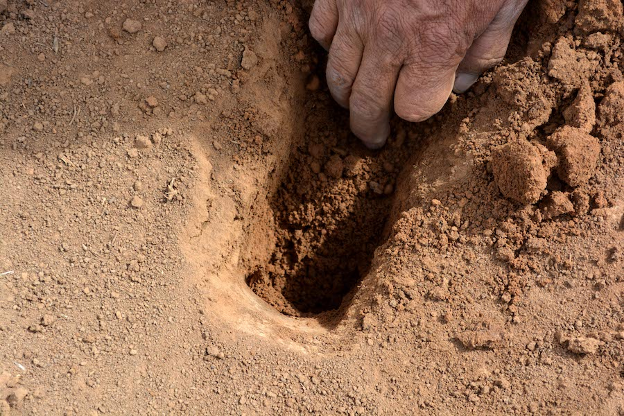 5. The moist soil at the bottom of the hole is loosened.